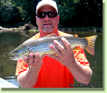 Holston River Brown Trout Knoxville Fly Fishing GUide